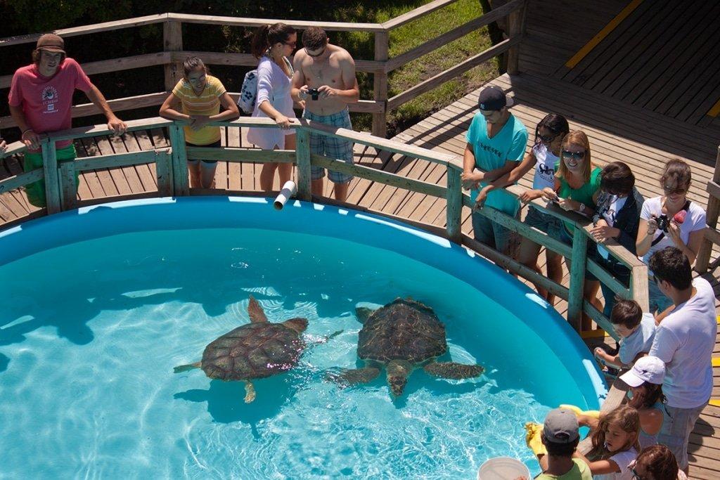 Timirim blog post Oceano mar oceano projeto tamar tartarugas criancas