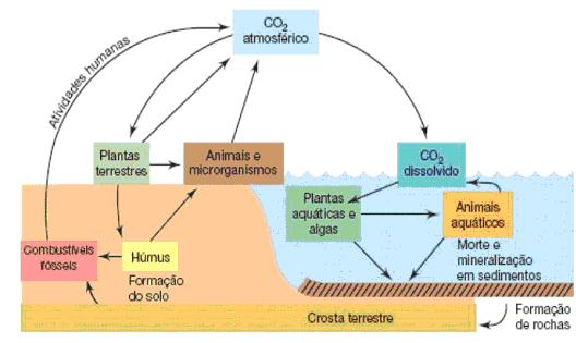 Timirim blog post Oceano ciclos oceano CO2 plancton