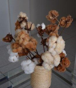 Algodão orgânico nativos naturalmente colorido Paraiba Timirim - blogpost 8