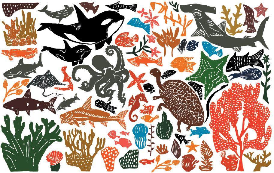 Ilustração da riqueza dos Rios e Oceanos pelo artista J.Borges para a coleção Oceano da Timirim